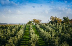 Tuscany Royalty Free Stock Photos