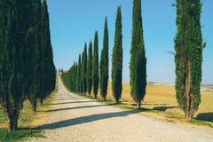 Tuscany krajobraz cyprysowi drzewa drogowi w W?ochy fotografia royalty free