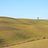 Tuscany, krajobraz. Toczni wzgórza i drzewo. Zdjęcie Stock