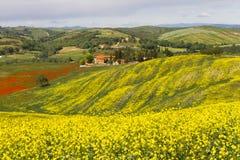 Tuscany krajobraz z kwitnącym rapeseed blisko Siena, Włochy Fotografia Royalty Free