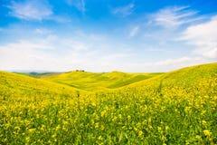 Tuscany krajobraz z polem kwiaty w Val d Orcia, Włochy Obraz Stock