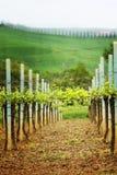 tuscany krajobrazowy winnica Zdjęcia Royalty Free