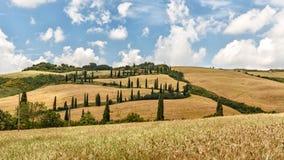 Tuscany Kształtuje teren panoramę, wzgórza, cyprysu i łąki, Fotografia Royalty Free
