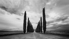 Tuscany Kształtuje teren panoramę, wzgórza, cyprysu i łąki, Obrazy Royalty Free