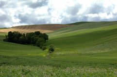 Tuscany landscape. With trees and harvested wheat Stock Photo