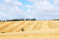 Tuscany landscape. A tuscany landscape with yellow fields stock image