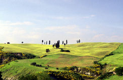Tuscany landscape. Hill and cypress in the country near Volterra, Italy Stock Images