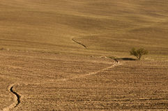 Tuscany landscape. Tuscany field with a tree royalty free stock images