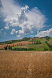 Tuscany Landscape. Wheat fields in Val d'Orcia, Tuscany, Italy, with famous cypress S shaped pathway Stock Photo