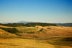 Tuscany landscape. Sunny landscape of summer golden rolling fields of forest Tuscany, Italy Royalty Free Stock Image