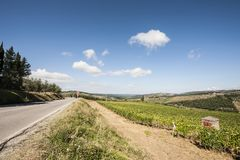 Road between Vineyards. Tuscany landscape with asphalt road and vineyards. Road between vineyards in Italy Royalty Free Stock Image