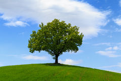 Free Tuscany Landscape, Beautiful Green Hills And Lonely Tree Springt Stock Photos - 86655583