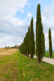 Tuscany landscape, beautiful green hills and cypress tree row sp Stock Image