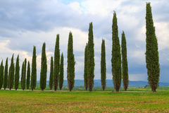 Tuscany landscape, beautiful green hills and cypress tree row sp Stock Images