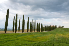 Tuscany landscape, beautiful green hills and cypress tree row sp Stock Photos