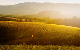 Tuscany, Landscape. A beautiful sunset with the tuscan landscape in background, hills, cypress, olive trees Royalty Free Stock Images