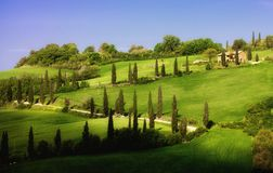 Tuscany Landscape with Cypress Alley Royalty Free Stock Photos