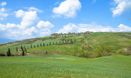 Tuscany Landscape. Cypress alley  Tuscany  Landscape  Italy Royalty Free Stock Image