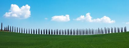 Tuscany landscape with cypress alley royalty free stock images