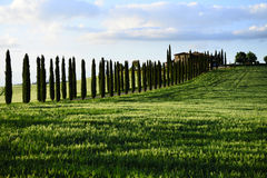 Tuscany landscape with cypress alley at sunset , Vall d'Orcia Italy. Tuscany landscape with cypress alley at sunset near Pienza, Vall d'Orcia Italy Royalty Free Stock Photography