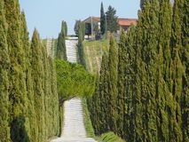 Tuscany, landscape of a cypress avenue near the vineyards royalty free stock image