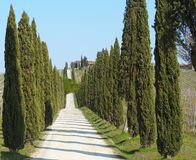 Tuscany, landscape of a cypress avenue near the vineyards stock image