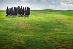 Tuscany landscape - cypress grove Stock Photo
