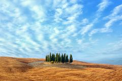 Tuscany landscape - cypress grove Royalty Free Stock Photo