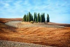 Tuscany landscape - cypress grove Royalty Free Stock Image