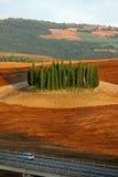 Tuscany landscape - cypress grove Stock Image