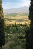 Tuscany Landscape with cypress Royalty Free Stock Image