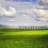 Tuscany landscape, Cypress Trees row and wheat, Italy. Royalty Free Stock Images