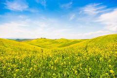 Tuscany landscape with field of flowers in Val d Orcia, Italy Stock Image