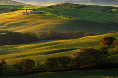 Tuscany landscape with fog. Sunrise morning in Tuscany landscape. Idyllic view of hilly meadow in Tuscany in beautiful morning lig Stock Photos