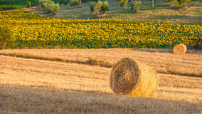Tuscany landscape with hay bales in the field, Italy Royalty Free Stock Photo