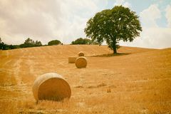 Tuscany landscape with hay bales, hills and meadow, Italy. Vintage toned image, film grain effect royalty free stock photography