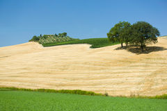 Tuscany landscape about meadow and hills, with winery. Stock Image