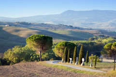 Tuscany landscape in the morning. Tuscan farms, hills, cypress trees Stock Photography