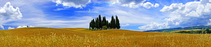 Tuscany landscape. Panorama, cypress trees oat fields