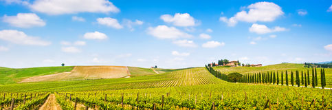 Tuscany landscape panorama with vineyard in the Chianti region, Tuscany, Italy. Panoramic view of scenic Tuscany landscape with vineyard in the Chianti region stock image