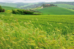 Tuscany landscape. Royalty Free Stock Photo