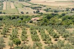 Tuscany, landscape at summer Stock Images