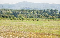 Tuscany landscape. In a summer day Stock Images