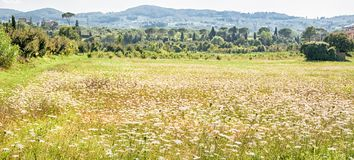Tuscany landscape. In a summer day Stock Photography