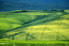 Tuscany landscape  at sunset near Pienza, Vall d'Orcia Italy Stock Photo