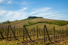 Tuscany Landscape. Typical Chianti Countryside at Spring Italy Royalty Free Stock Photos