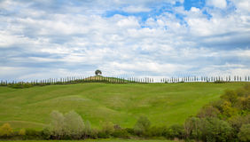 Tuscany Landscape. Tuscany Typical cypress Landscape Italy Royalty Free Stock Photography