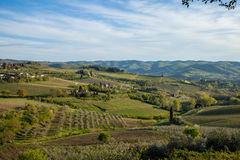 Tuscany Landscape. Tuscany Typical cypress Landscape Italy Stock Photo