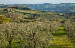 Tuscany Landscape. Typical Tuscany Spring Landscape  Italy Royalty Free Stock Image