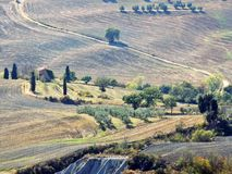 Tuscany landscape. With typical trees, fields and meadows royalty free stock photo